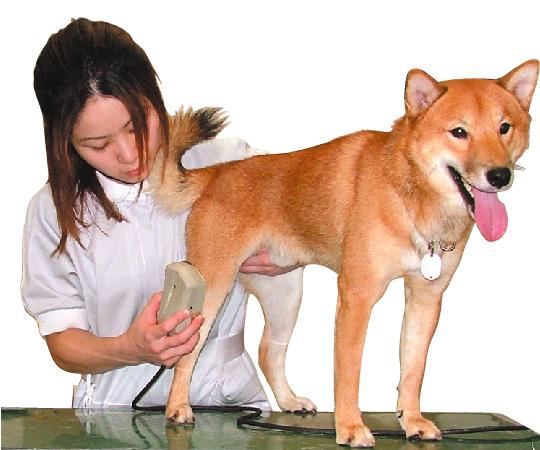 動物用光線治療器
